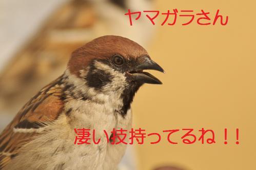 135_20130215211557.jpg
