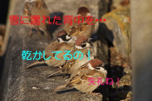 140_20130306210144.jpg