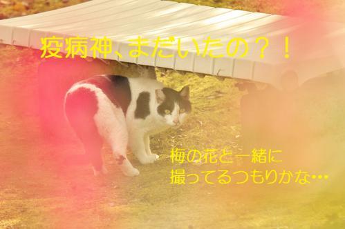 140_20130313215426.jpg