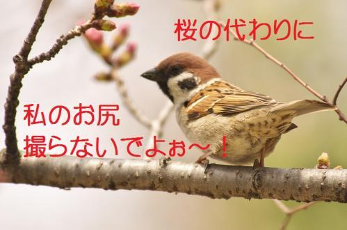 140_20130327210541.jpg