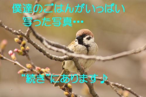 140_20130328201313.jpg