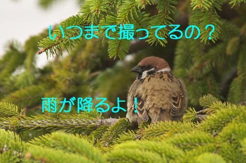 140_20130329214209.jpg