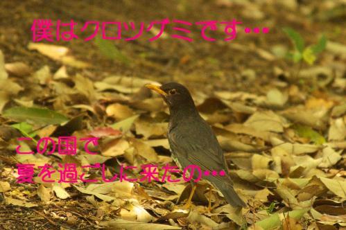 140_20130503222351.jpg