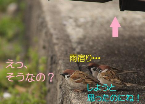 145_20130329214216.jpg