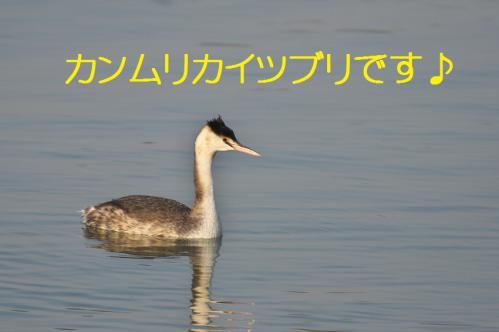 150_20130317212207.jpg