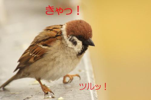 150_20130320211247.jpg