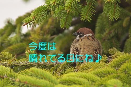 150_20130329214230.jpg