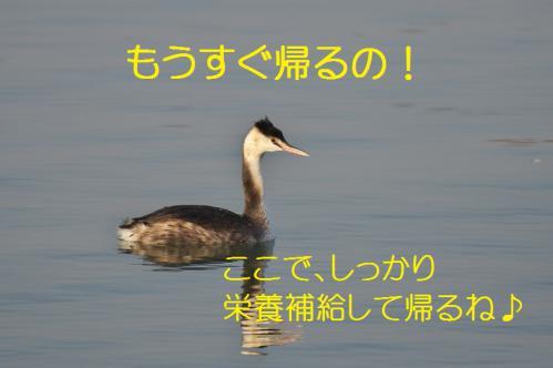 160_20130317212210.jpg