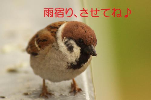 160_20130320211322.jpg