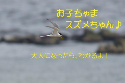 170_20130528190024.jpg