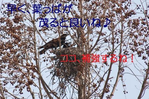 180_20130330215144.jpg