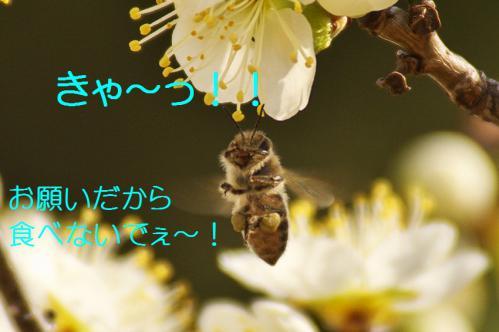 190_20130312194852.jpg