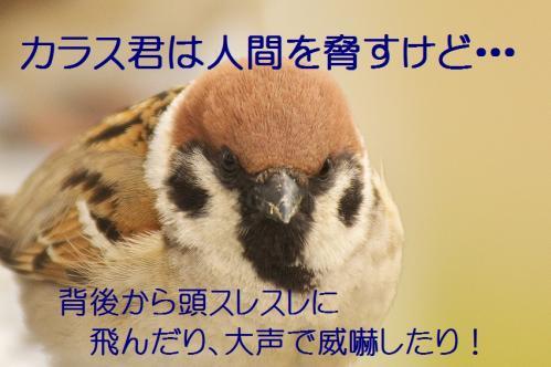 190_20130330215208.jpg