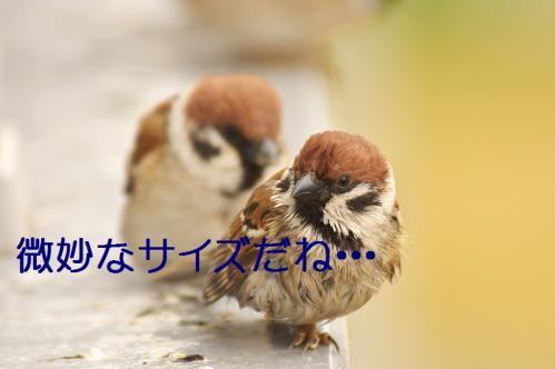 190_20130331171844.jpg