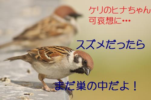 190_20130428195958.jpg