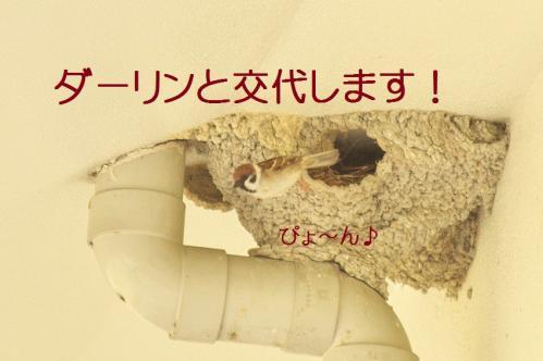 190_20130430194554.jpg