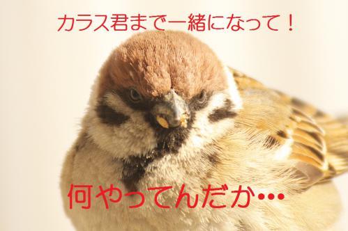 200_20130307204732.jpg
