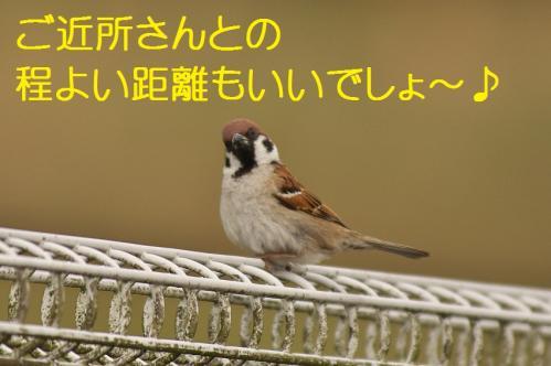 200_20130430194557.jpg