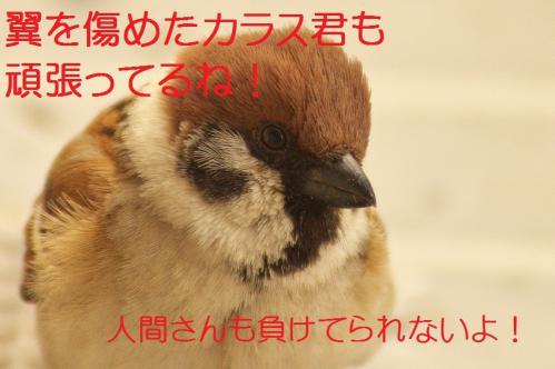 210_20130307204735.jpg