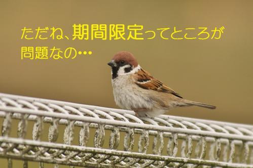 210_20130430194600.jpg