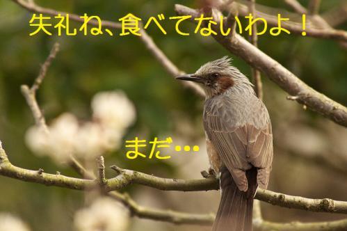 220_20130312194940.jpg