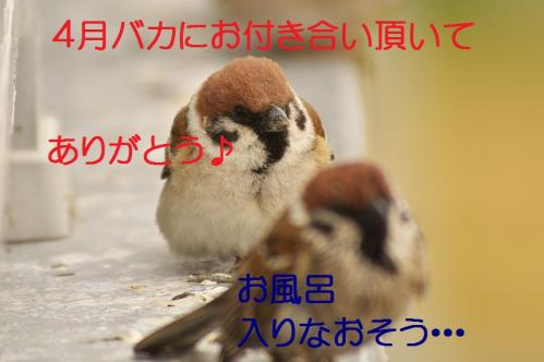220_20130331172107.jpg