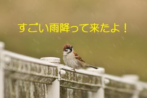 220_20130430194603.jpg