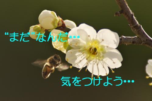 230_20130312194942.jpg