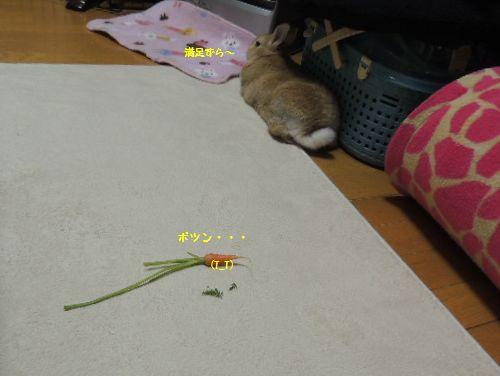 ニンジンの葉9