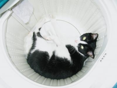 洗濯機を占領