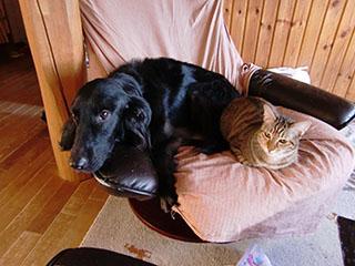 犬にべったりの猫