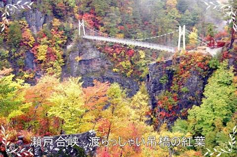 s-瀬戸合峡 渡らっしゃい吊橋紅葉