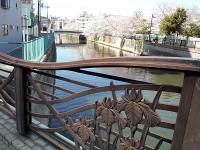 桜と菖蒲と呑川