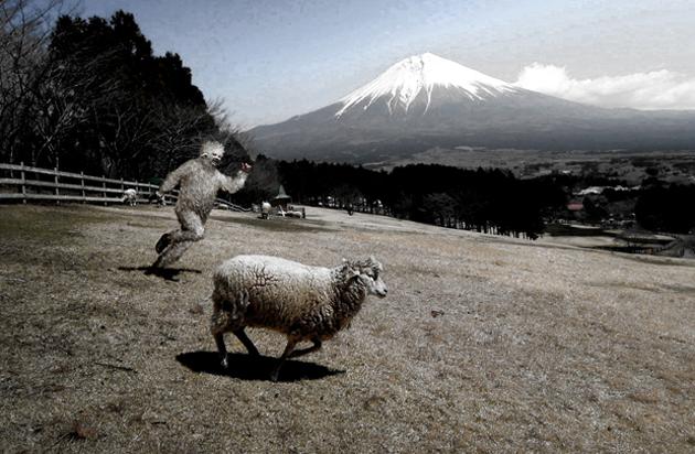 羊を追いかける羊男web