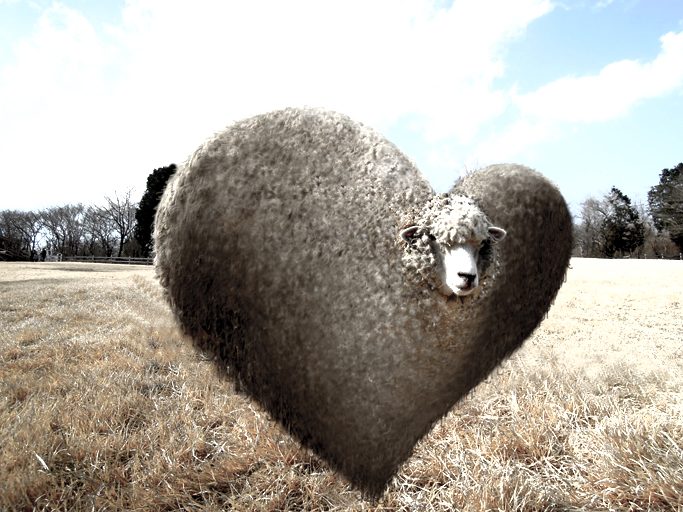 heart sheep