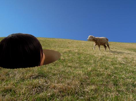小羊と対面