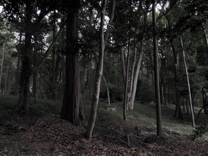 20120613_3159.jpg