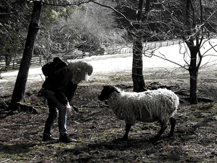 sheept2.jpg