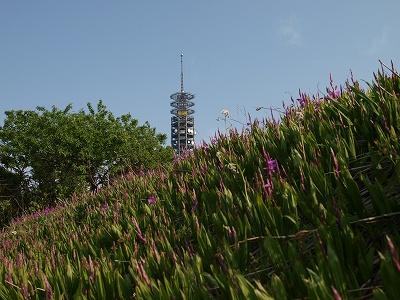 花とタワー
