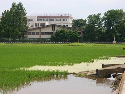 田んぼと学校