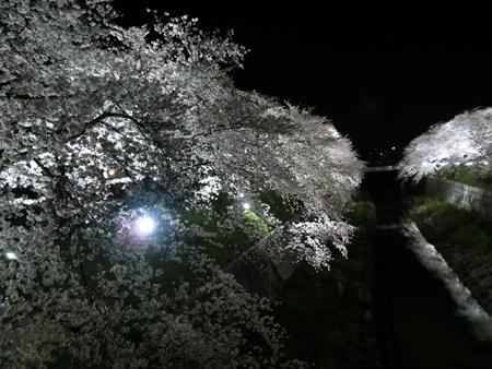 CIMG4687.jpg