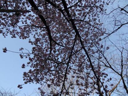 2013年3月9日上野公園②