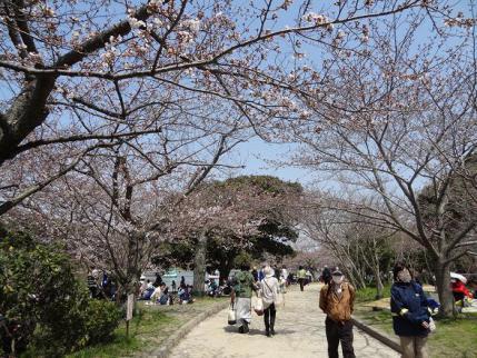2013年3月30日明石公園③