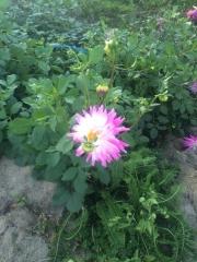 田口不動産 秋の花