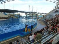 花蓮海洋公園イルカショー前座ジャグラー曲芸中130919