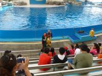 花蓮海洋公園イルカショー前座ジャグラーが観客にからむ130919