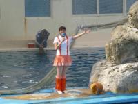花蓮海洋公園イルカショーでMCお姉さん登場130919