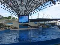 花蓮海洋公園イルカショーでイルカ登場130919