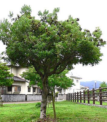 n-muromigawa-4-2.jpg