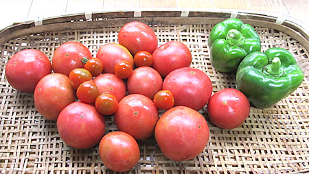 n-tomato-1.jpg
